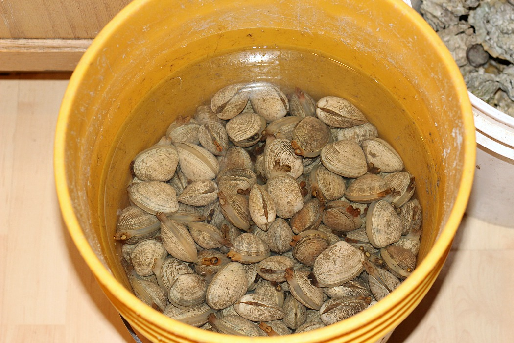 This White Wine Steamed Clams Recipe are perfect for when you have a fresh batch of clams! So easy to put together and the wine adds an amazing flavor too!